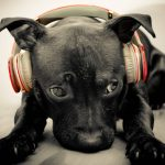 dog_animal_cute_headphone_2560x1460