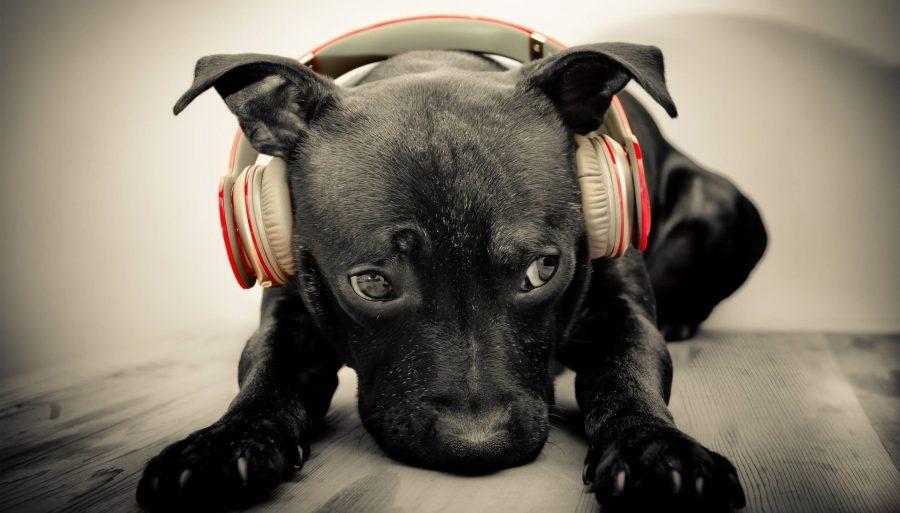 dog_animal_cute_headphone_2560x1460